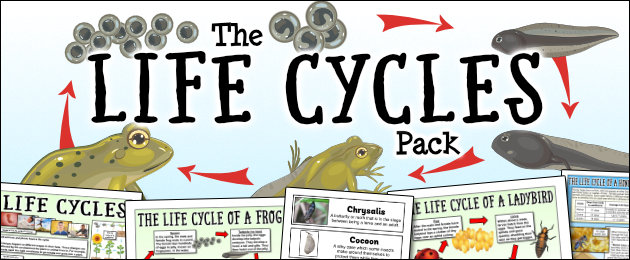 The Life Cycles Pack