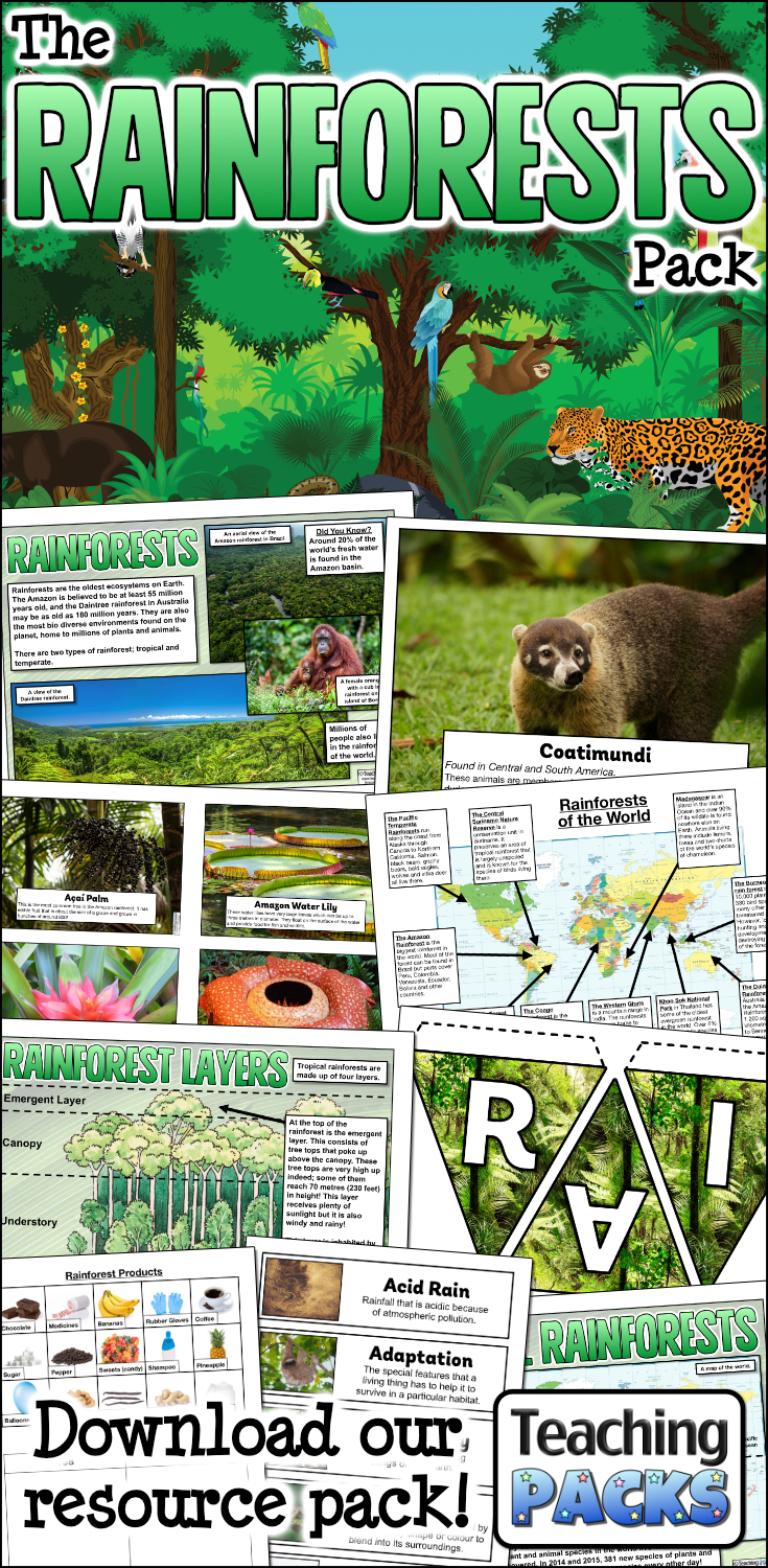 The Rainforests Pack
